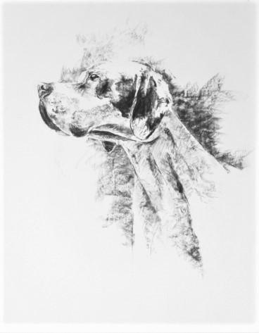chien-fusain-1